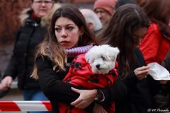 014025 - Alcalá de Henares (M.Peinado) Tags: perro perros animal animales sanantón bendicióndesanantón bendición callemayor alcaládehenares comunidaddemadrid españa spain 19012020 enerode2020 2020 canoneos60d canon copyright
