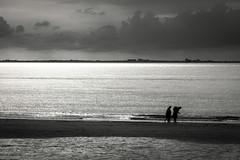 shell collectors (fhenkemeyer) Tags: sea beach water netherlands zeeland zoutelande clouds