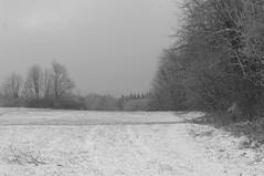 Wald&Wiese (shortscale) Tags: schnee schwarzweiss blackandwhite noiretblanc monochrome buw pentax kx smcpentaxm11750mm wald wiese schwäbischealb
