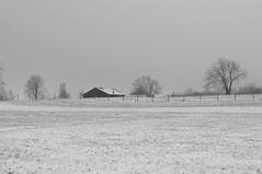 Landschaft (shortscale) Tags: schnee schwarzweiss blackandwhite noiretblanc monochrome buw pentax kx smcpentaxm11750mm wiese stall weide schwäbischealb