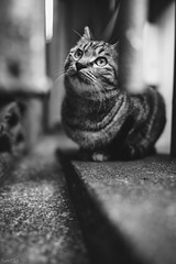 猫 (fumi*23) Tags: ilce7rm3 sony sel24f14gm 24mm emount a7r3 animal alley cat chat neko gato monochrome bokeh bw blackandwhite bnw ねこ 猫 ソニー