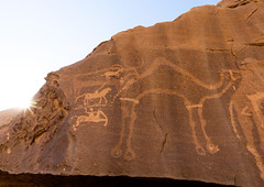 Petroglyphs of camel, Najran Province, Thar, Saudi Arabia (Eric Lafforgue) Tags: ancient ancientcivilisation arabia archaeology art bi'rhima birhima camel colorpicture cultures day desert emptyquarter engraving famousplace heritage horizontal humanrepresentation hunt hunter incenseroute indigenousculture ksa ksa190837 middleeast nopeople nonurbanscene outdoors petroglyph petroglyphs photography prehistoricrockart preserves rock rockobject rockart rockcarving rubalkhali saudiarabia stoneobject storytelling thar tourism travel traveldestinations najranprovince