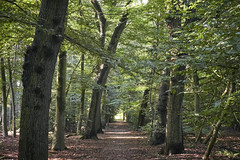 herfst (Jos Mecklenfeld) Tags: autumn herbst herfst forest wald bos nature natur natuur westerwolde netherlands niederlande nederland mushrooms pilzen paddenstoelen sonya6000 selp1650 terapel groningen