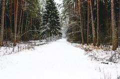 Winter landscape and snow in the forest. (ivan_volchek) Tags: background beautiful beauty black branch clear cold color cool country day environment field forest freeze frost green holiday ice landscape light mountain natural nature noroad outdoor park pine road scene scenic season silverglitter sky snow snowspace snowy survival timeofyear travel tree view weather white whiteness winter winterforest wood woods