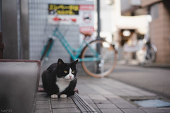 猫 (fumi*23) Tags: ilce7rm3 sony street sel55f18z sonnar sonnartfe55mmf18za a7r3 animal alley cat chat gato neko 55mm emount bokeh dof depthoffield ねこ 猫 ソニー