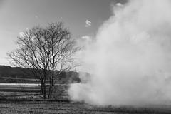 野焼 (fumi*23) Tags: ilce7rm3 sony sel55f18z 55mm emount sonnar sonnartfe55mmf18za a7r3 monochrome bnw bw blackandwhite miyazaki tree smoke life ソニー 宮崎 モノクロ