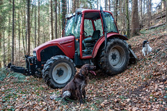 WALDARBEIT . FORESTRY WORK (LitterART) Tags: traktor tractor forstarbeiten waldarbeiten dog hund benny philetta forestry works lindner lindnergeotrac60 münsterländer bordercollie