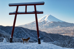Can't Take My Eyes Off You (Yuga Kurita) Tags: fuji mt mount san fujiayam japan landscape nature fujisan travel inu shiba dog shibainu shibadog snow snowscape winter season yamanashi fujikawaguchiko snowcapped mountain scenic beauty
