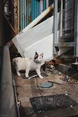 猫 (fumi*23) Tags: ilce7rm3 sony sel24f14gm a7r3 animal alley apsccrop street cat chat gato neko ねこ 猫 ソニー emount 24mm