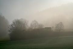 Misty Weather (pstenzel71) Tags: landschaft wald thuringia thüringen darktable fog mist nebel ilce7rm3 sel100400gm