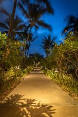 Luxury Pathway (grwmcfarland) Tags: mauritius island holiday palm trees resort