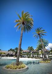 Resort Pool (grwmcfarland) Tags: mauritius island holiday palm trees resort
