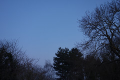The Blue Hour (Gill Harle) Tags: week2 52weeksof2020 minimalism thebluehour silhouette trees