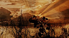 sunflower (patrick.verstappen) Tags: nikon d5100 sigma winter acryl medium art belgium gingelom patrick verstappen google ipernity ipiccy image photo picassa pinterest pat painting blume strukturiert gemälde kunst seelandschaft fleur jardin texturé peinture paysage marin texture textured twitter facebook fantasy flor texturado pintura marina цветок сад stormy autumn drawing imagine inspiration inspirational zen coast smile xxx barbie cumulus clouds cloudy pigeons textura landschape wheat fields coolpix bélgica balance birds sunflower bloomed colored aaa flashing flash