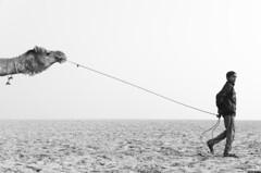 Varanasi (MohamedRaffi) Tags: cwc chennaiweekendclickers cwc771 varanasi ganges blackandwhite camel