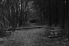 Im Wald (shortscale) Tags: schnee schwarzweiss blackandwhite noiretblanc monochrome buw pentax kx smcpentaxm11750mm wald schwäbischealb