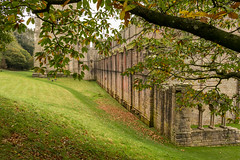 Fountains Abbey (Keith now in Wiltshire) Tags: fountainsabbey abbey abbeychurch harrogate cistercian monastery ruins remains listed gradei building architecture tower magnesianlimestone tree foliage bough spreading sweetchestnut grass bank landscape yorkshire england nationaltrust englishheritage
