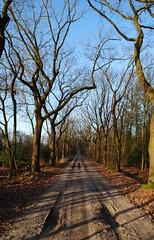 Cranendonck 200118 22 (corvus1972) Tags: soerendonk cranendonck noordbrabant brabant nederland bos grooteheide winter