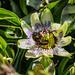 Bumble Bee 04