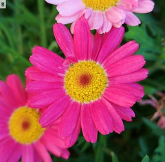 Flores coloriDAS (In Dulce Jubilo) Tags: fotografía photography flor flores flowers colors colores naturaleza nature belleza nice jardin garden andalucia andalusia espagne españa spanien spain