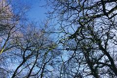 branches (Jos Mecklenfeld) Tags: nature forest eiken branches natur natuur oaks bos wald eichen rnifilms takken zweige