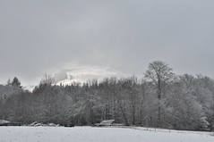 Es werde Licht (Uli He - Fotofee) Tags: gersfeld rhön winter schnee licht bäume kiefer ulrike ulrikehe uli ulihe ulrikehergert hergert nikon nikond90 fotofee