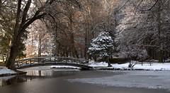 Nur ein kurzer Moment! (Renata1109) Tags: winter schnee weiher see wasser eis brücke outdoor natur park snow baum tree licht schatten