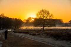 Richmond Park sunrise January 2020 (www.kevinoakhill.com) Tags: richmond park sunrise january 2020 amazing gorgeous wonderful beautiful photo photos photography professional camera canon eos 7d mark 2 ii sun rise set upon thames river stunning hot people male female man woman bird birds ray rays travel incredible yellow orange sky clouds fly flying flight deer wildlife animal animals lake water wet pond ponds pen silhouette shadow shadows