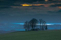 Zugersee (andre.kirtz) Tags: aargau zugersee landschaft schweiz see januar seelandschaft morgenrot morgenstimmung winterbaumgruppe freiamt natur horben