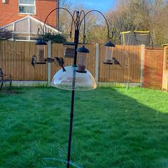 Photo of Birds feeding