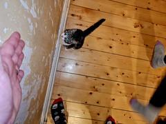 Huawei 2020 01 19 (Sibokk) Tags: beasts cat digital edinburgh huawei mobile olive p20pro photography scotland uk