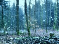 Winterwald 190120-01 (martinritter1) Tags: winter wald forest snow schnee