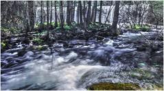 Invierno, sus aguas bajan muy frias (<<<María>>>) Tags: agua naturaleza natura campo piedras rios river españa laisla