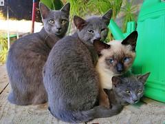 Familia de gatitos (In Dulce Jubilo) Tags: kitten cachorro cachorros gato gatitos cat cats animal familia family hermanos hermanas brothers sisters andalucia andalusia animals animales espagne españa spanien spain