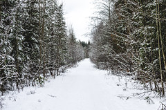 Road in the winter in the forest. (ivan_volchek) Tags: adventure alley background beautiful beauty bright car christmas cold country countryside cover driving environment forest freeze frost holiday ice journey landscape magic natural nature nobody outdoor park pine road rural scene scenery season snow snowfall snowy travel tree trip tunnel vacation view way white winter wonderland woodland woods