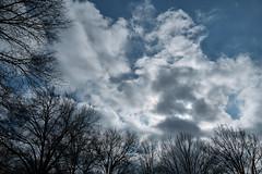Classic Winter Sky Clouds Sun Trees (Modkuse) Tags: sky skyscape wintersky brightsky bluesky dramaticsky clouds cloudyday cloudy cloudscape trees sunny nature natural natureart art artphotography artistic artisticphotography photoart classicchrome fujifilmxh1classicchrome fujifilm fujinon fujifilmxh1 xh1 fujinonxf1655mmf28rlmwr xf1655mmf28rlmwr wideangle