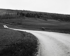 16/366 Road to nowhere (Brad Visser) Tags: blackandwhite ilfordpanf film filmisalive winter tree 365photographyproject 365photoproject zenzabronicags1 120film 6x7 trees road landscape winterscape