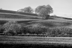 Ridge+Furrow (Tony Tooth) Tags: nikon d600 nikkor 200mm ai ridgeandfurrow farming farmland fields landscape countryside bw blackandwhite monochrome england