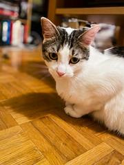 Happy caturday Max !!! (DavidB1977) Tags: max cat katze chat apple iphone 11