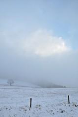 (Uli He - Fotofee) Tags: gersfeld rhön winter schnee licht bäume kiefer ulrike ulrikehe uli ulihe ulrikehergert hergert nikon nikond90 fotofee