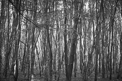 herfst (Jos Mecklenfeld) Tags: autumn herbst herfst forest wald bos nature natur natuur westerwolde netherlands niederlande nederland mushrooms pilzen paddenstoelen terapel groningen sonya6000 selp1650