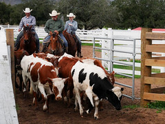 Texas cowboys (irmur) Tags: texas ranch george cowboy cow houston horse