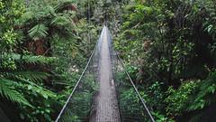 Abel Tasman Brigde (G.Heraud) Tags: new zealand olympus omd em5 south island newzealand bridge forest forêt green abeltasman