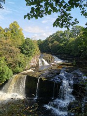 Photo of Bonnington Linn