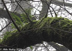 Photo of Money Doesn't Grow on Trees but Ferns Do!!