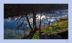 Spaziergang am Rhein (Fred from Switzerland) Tags: rhein spaziergang em5 januar