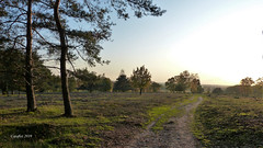 Plantage Willem III - Elst. (Cajaflez) Tags: landscape landschap bomen trees light licht pad path plantagewillemiii
