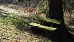 grass grows - below the bench - shadows fall (1elf12) Tags: güntersberge harz germany deutschland bench bank haiku mary mccreath poem gedicht katzensohlteich