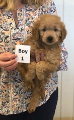 Annie Boy 1 1-19