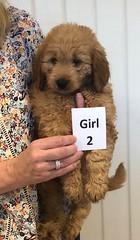 Annie Girl 2 1-19